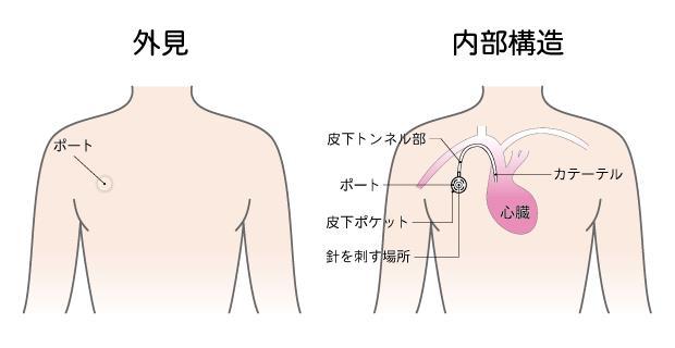 (日本統合医療推進協会HPより)